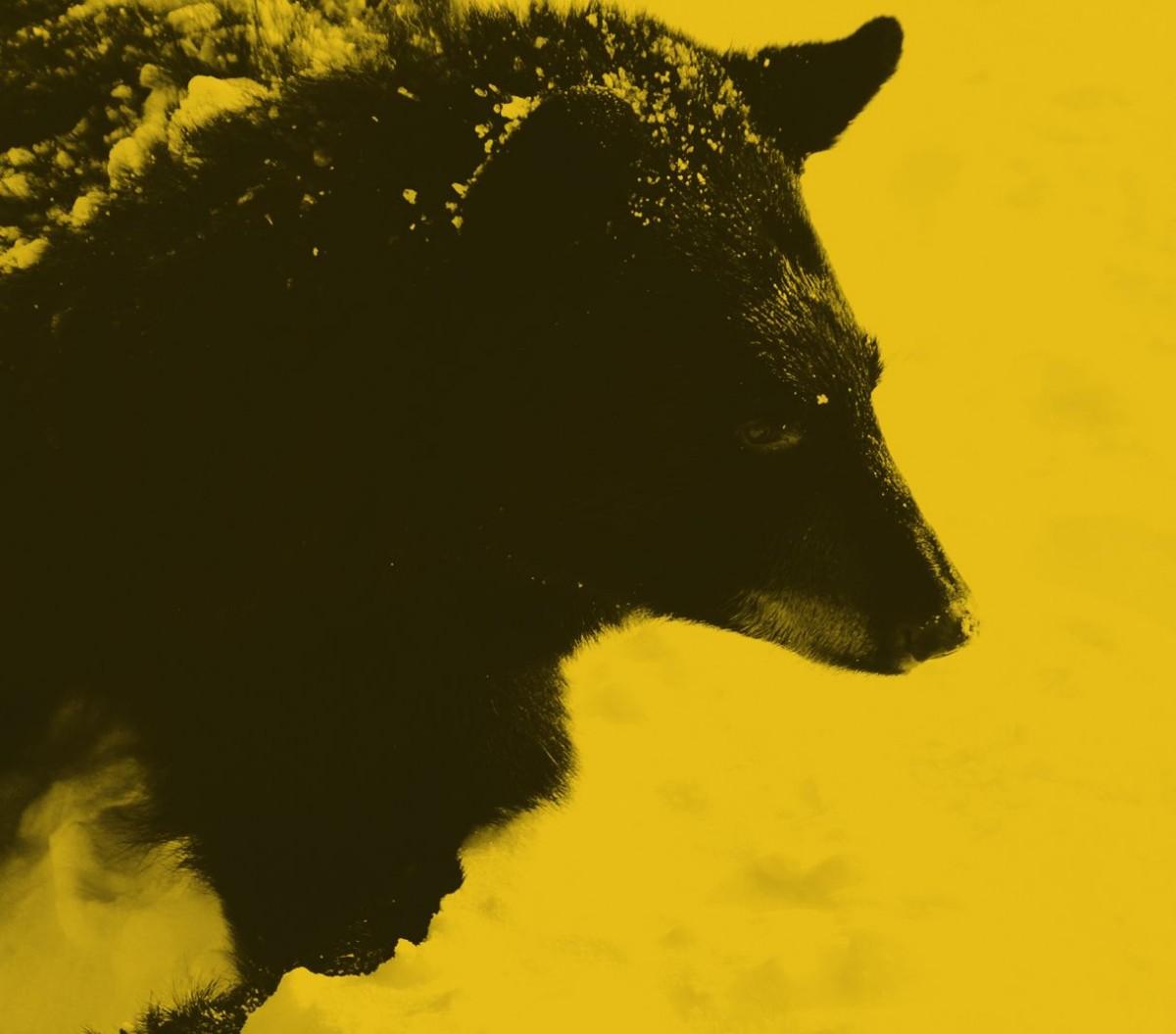 Photo d'un ours brun
